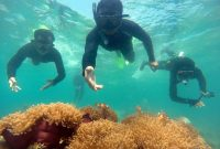 Snorkeling (Selam Dangkal) Karimun Jawa