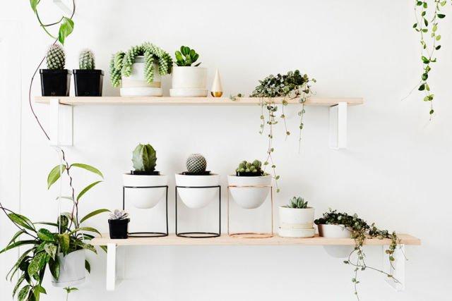 Dekorasi tanaman sukulen gantung dalam rumah