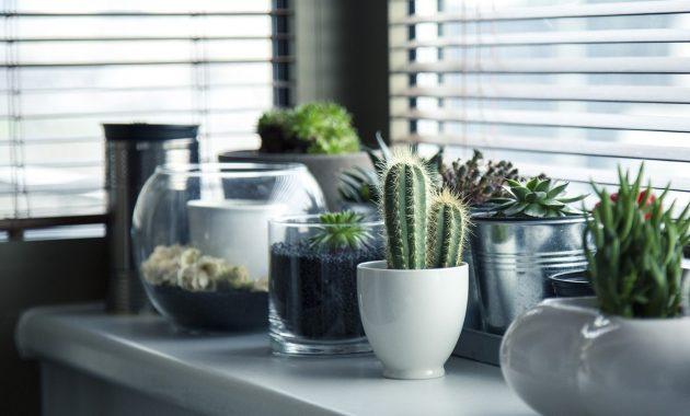 Tanaman Hias Dalam Rumah Kaktus